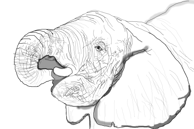 Elephant-HIk