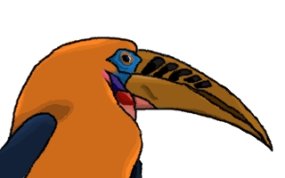 hornbill illustation