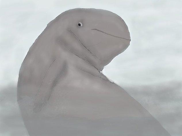 Anne Irrawaddy Dolphin