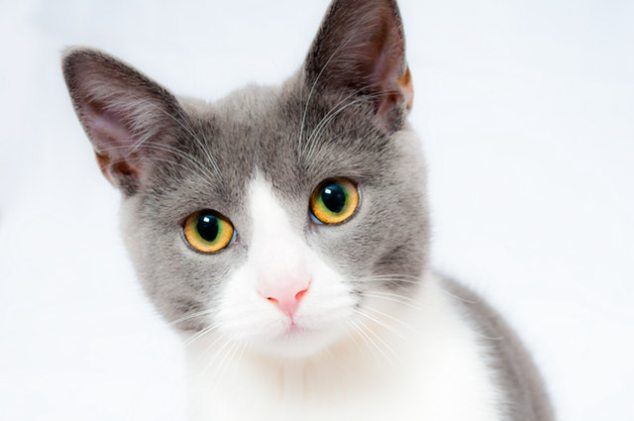 cat-pet-animal-domestic-104827